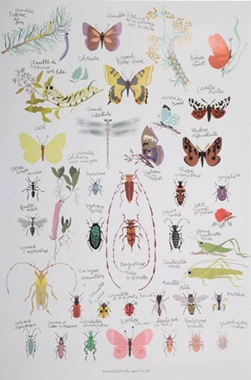 Insect poster - HabitatKid blog