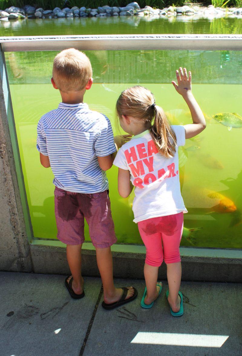 Museum of Natural Curiosity (8) - HabitatKid blog